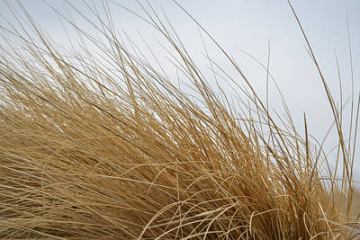 Photograph - Windy Grass by Dwayne Schnell
