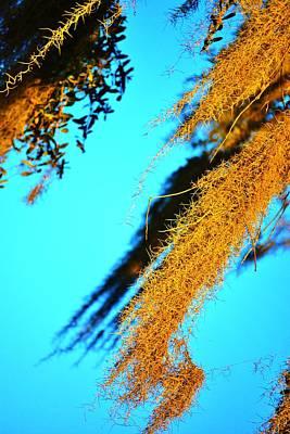 Windy Moss Art Print