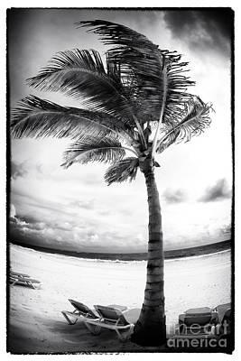 Windy Palm Art Print by John Rizzuto