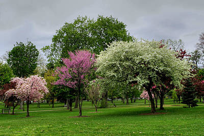 Photograph - Windy Wet And Cold Spring Beauty by Gene Walls