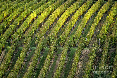 Wine Acreage In Germany Art Print by Heiko Koehrer-Wagner
