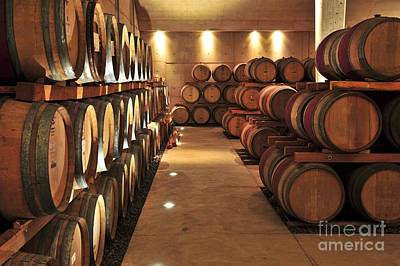 Row Photograph - Wine Barrels by Elena Elisseeva