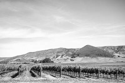 Vineyard Photograph - Wine Country Edna Valley In Black And White by Priya Ghose