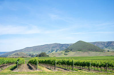 Central Coast Winery Photograph - Wine Country Edna Valley by Priya Ghose