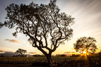 Central Coast Winery Photograph - Wine Country Sunset by Richard Cheski