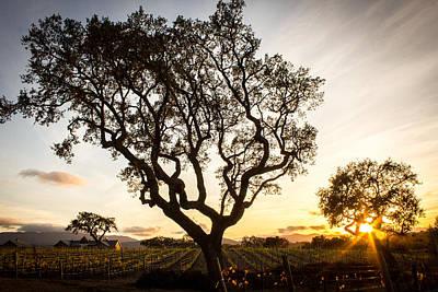 Wine Country Sunset Print by Richard Cheski