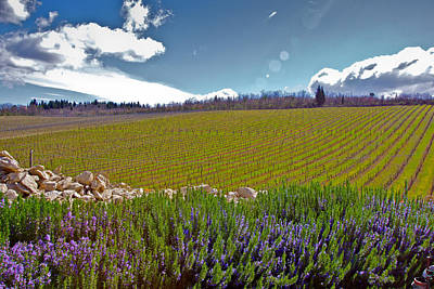 Photograph - Wine Country by Walt  Baker