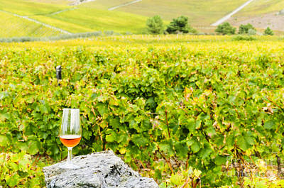 Winery Photograph - Wine Glass And Vineyards by Oscar Gutierrez