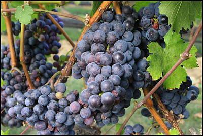 Wine Grapes Of New York Original by Dora Sofia Caputo Photographic Art and Design