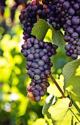 Wine Grapes Art Print by Scott Pellegrin