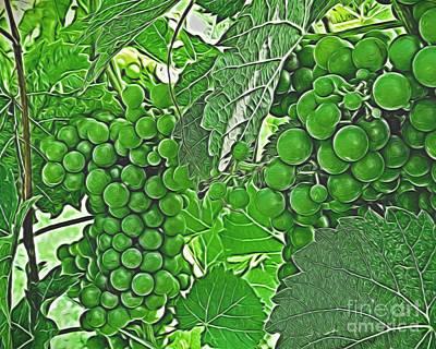 Photograph - Wine Harvest by Dawn Gari