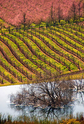 Winelands In Springtime Art Print by Dennis Cox WorldViews