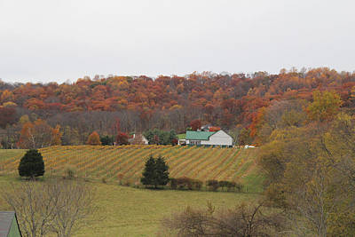 Winery In Virginia At Fall Art Print by Renee Braun