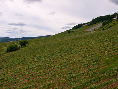 Photograph - Wineyards And Niederwalddenkmal At Rudesheim by Jouko Lehto