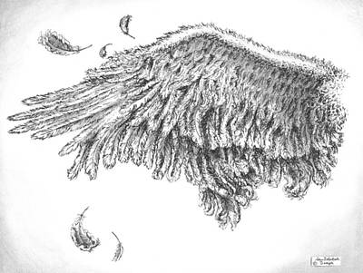 Animals Drawings - Wing by Adam Zebediah Joseph