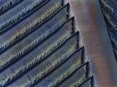 Swallow Photograph - Wing Feather Detail Of Swallow Sem by Science Photo Library
