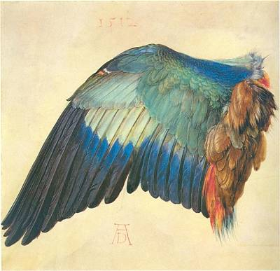 Wings Of A Bird Painting - Wing Of A European Roller by Albrecht Durer