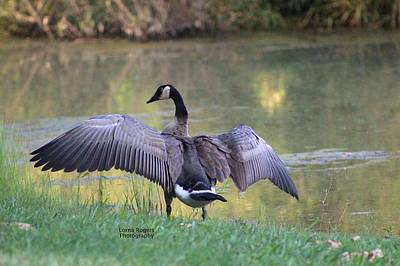 Art Print featuring the photograph Wing Span by Lorna Rogers Photography