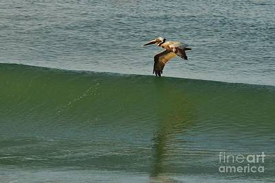 Photograph - Wing Surfer by Lynda Dawson-Youngclaus