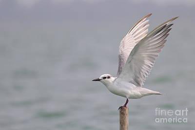 Photograph - Wing To Wing by Vishakha Bhagat