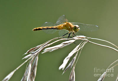 Photograph - Winged Beauty by Cheryl Baxter