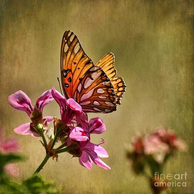 Photograph - Winged Beauty by Peggy Hughes