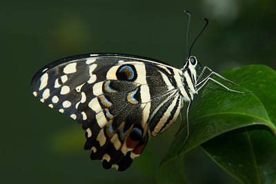 Photograph - Winged Beauty by Tam Ryan
