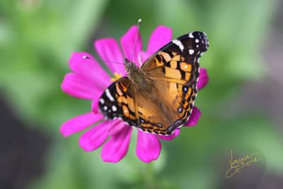 Winged Beauty Art Print