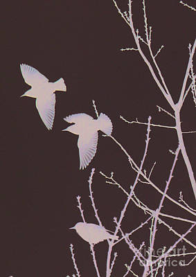 Photograph - Winged Ones by Jeanette French