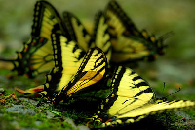 Photograph - Wings Along The Stream by Michael Eingle