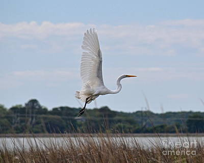 Art Print featuring the photograph Wings by Carol  Bradley