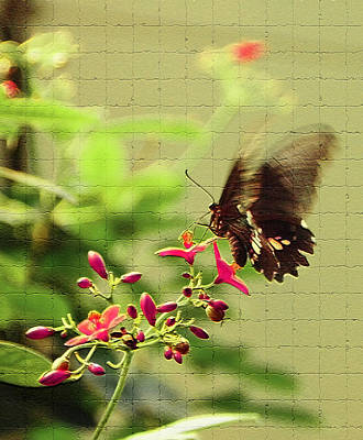 Free Photograph - Wings In Motion by Aimee L Maher Photography and Art Visit ALMGallerydotcom