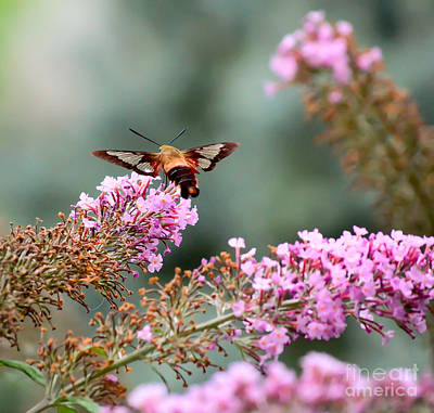 Print featuring the photograph Wings In The Flowers by Kerri Farley
