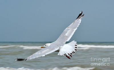 Art Print featuring the photograph Wings Of Freedom by Simona Ghidini