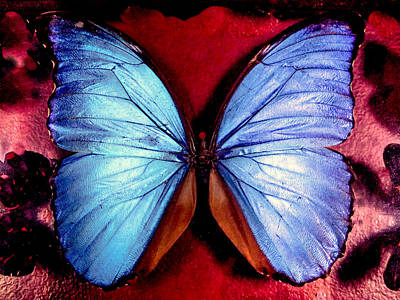 Blue Swallowtail Photograph - Wings Of Nature by Karen Wiles