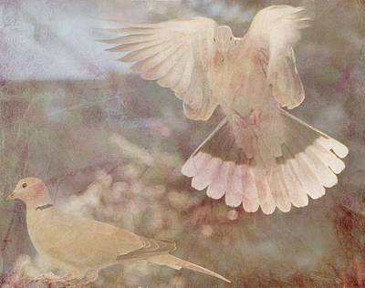 Photograph - Wings Of Peace by Diane Alexander