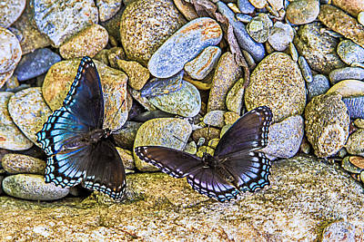 Photograph - Wings On The Rocks by Barry Jones
