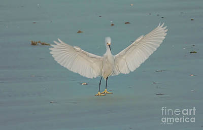 Egret Mixed Media - Wings Outstretched by Deborah Benoit