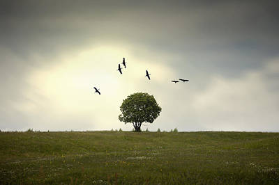 Photograph - Wings Over The Tree by Alfio Finocchiaro