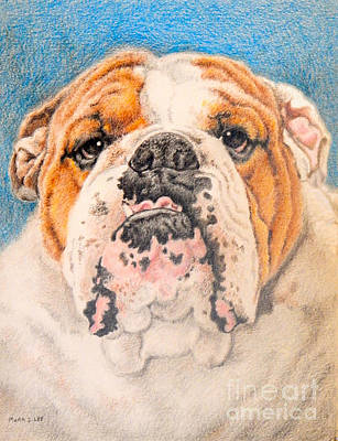 English Bulldog Drawing Drawing - Winston by Mark S  Lee