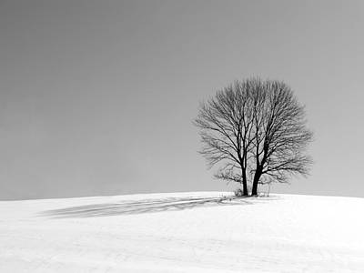 Photograph - Winter - Snow Trees In Mono by Richard Reeve