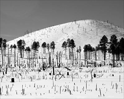 Winter After Fire-san Francisco Peaks Art Print