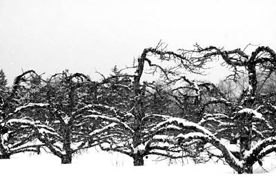 Rural Photograph - Winter Apple Orchard by Heather Allen