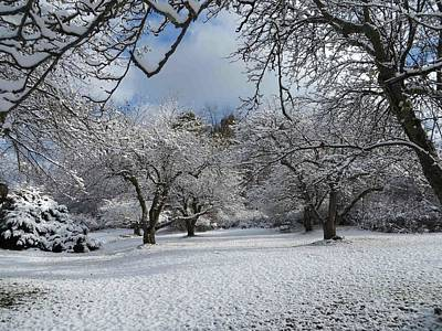 Photograph - Winter Apple Trees by Nancy-Fay Hecker