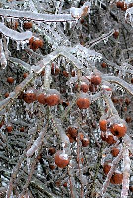 Photograph - Winter Apples by Douglas Pike