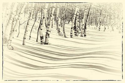 Winter Aspen Art Print