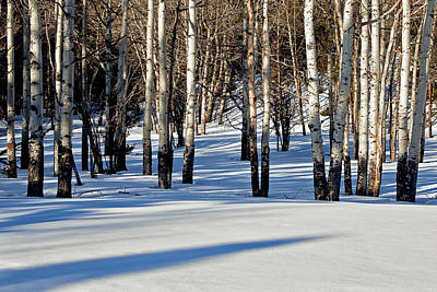 Art Print featuring the photograph Winter Aspens by Jack Bell