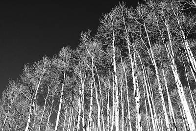 Art Print featuring the photograph Winter Aspens by Roselynne Broussard
