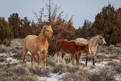 Photograph - Winter At Palomino Buttes by Wes and Dotty Weber