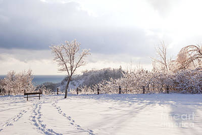 Photograph - Winter At Scarborough Bluffs by Elena Elisseeva